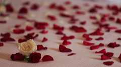 Petals of red roses close up Stock Footage