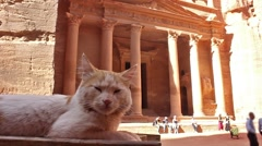 Cat on the background of facade Al Hazneh (the Treasury) in city Petra Stock Footage