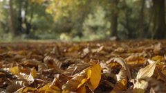 Along an avenue of trees during Autumns wonderful colour show. Stock Footage