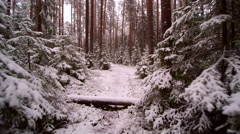 Trail in the forest filled with snow Stock Footage