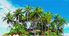 Gentle breeze moves green leaves of coconut palm trees on exotic tropical island Stock Footage