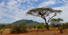 Samburu Scenic Stock Footage