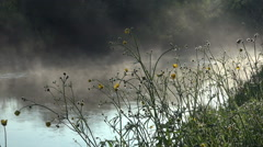 Yellow flowers on the shore against the backdrop of the river water mist Stock Footage