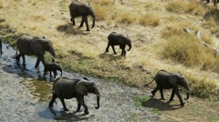 Elephant walking along riverbed 02 - stock footage