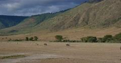 Ngorongoro Crater Stock Footage