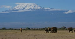 Mount Kilimanjaro Stock Footage