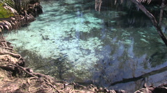 Three Sisters Spring Stock Footage