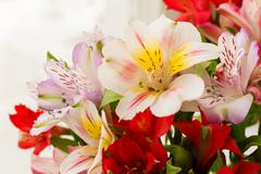 Alstroemeria bouquet. Close up. Natural spring background. Colorful flowers a - stock photo