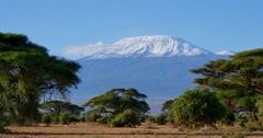Antelope and Mount Kilimanjaro Stock Footage