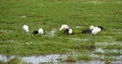 Water Birds - stock footage
