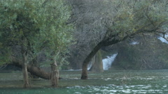 Beautiful view of trees grown in the water and the bottom of Kravice waterfall Stock Footage