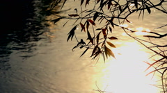 Willow branches in the autumn sun on thebackground reflected in the river Stock Footage