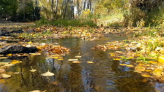 Yellow poplar leaves swirling in the water stream in autumn Stock Footage