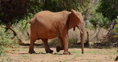 Elephant Mother and Baby Stock Footage