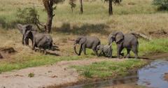 Elephant Herd at Riverside - stock footage