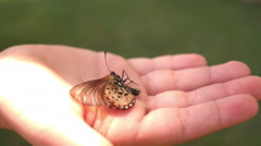 Stock Video Footage of Dying butterfly in child hand