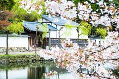 The perspective view of kyoto stree view as background in the sakura season - stock photo