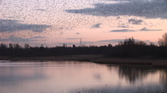 Beautiful murmuration of black birds flying over lake pink sunset Stock Footage
