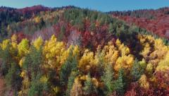 Flight Over Colorful Autumn Forest Stock Footage