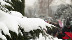 A branch of a fir tree covered with snow. Illustrative background Stock Footage