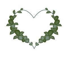 Fresh Green Acanthaceae Leaves in A Heart Shape Stock Illustration