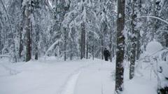Winter landscape.Winter scene Stock Footage