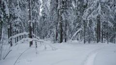 Winter landscape.Winter scene - stock footage