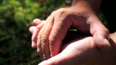 Forest frog perched on a man's hand Stock Footage