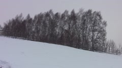 Birch forest that are in the wind icy winter, covered with white snow banks - stock footage