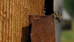 Wasp nest shelter as wall board from chalet Stock Footage