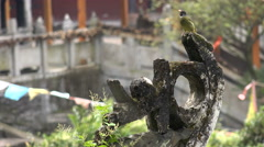 Ancient temple complex, bird flies away, Asian architecture, China - stock footage