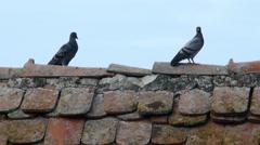 Three pigeons sit on the old roof ridge Stock Footage