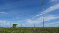 Seaside landscape swaying in the wind Stock Footage
