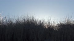 Dune grass blowing in the wind against the light Stock Footage