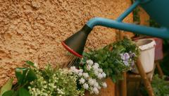 Details of a watering can pouring water on the little flowers Stock Footage
