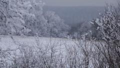 Forest and field covered with snow in a snowy winter day. Background nature Stock Footage