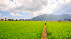 Old Man Photos Landscape among Rice Field Stock Footage