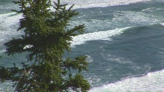 Rolling swells with pine tree - stock footage