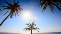 Camera Approaches Palm from Downward Bright Sun Blue Sky Stock Footage