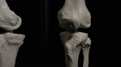 Anatomical Skeleton - Close up of knees on black - stock footage