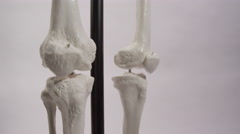 Anatomical Skeleton Knees - Isolated Model on background - - stock footage