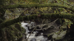 Mountain Stream Deep In The Wilderness Rack Focus Stock Footage