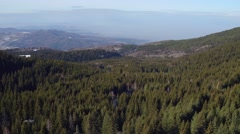 Green pine trees, rolling hills, aerial flight over the natural landscapes. Stock Footage
