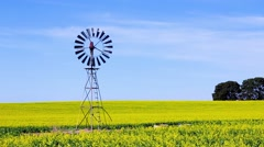 Windmill in a field of canola crop Stock Footage