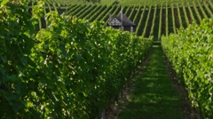 Beautiful vineyard on a sunny day Stock Footage