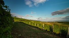 Timelapse of beautiful vineyards on a sunny evening Stock Footage