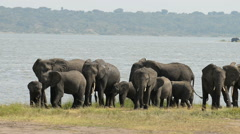 African elephant, Kazinga Channel, Queen Elizabeth National Park, Uganda. - stock footage