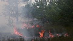 Wood fire under pine trees. Fire engine moving in the background. Stock Footage