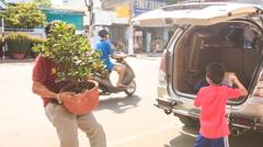 Man Puts Tangerine-tree in Pot into Car Boot in Vietnam Stock Footage