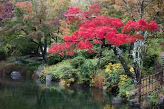 autumn red leaves tree in japanese style garden - stock photo